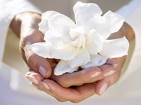 white-flower-in-hands_422_35735