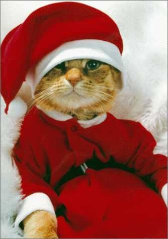 cat_christmas