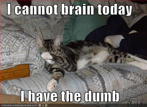 funny-pictures-cat-cannot-brain-today